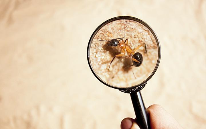Pest identification