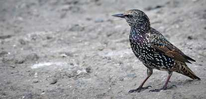 6 fascinating facts about birds