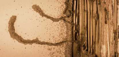 All you need to know about termites!