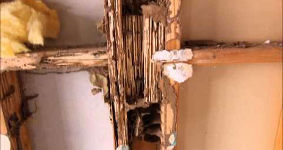 Example of Termite Damage