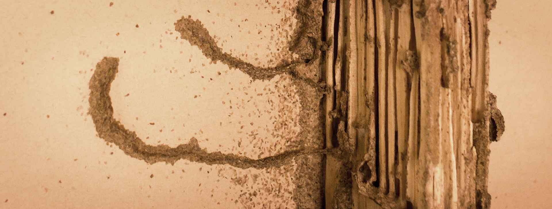 termite damage cropped