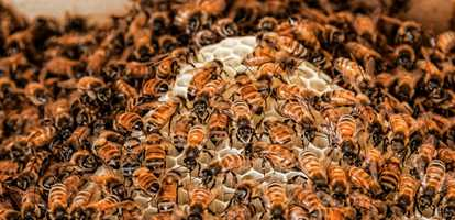 Need advice on how to get rid of bees?