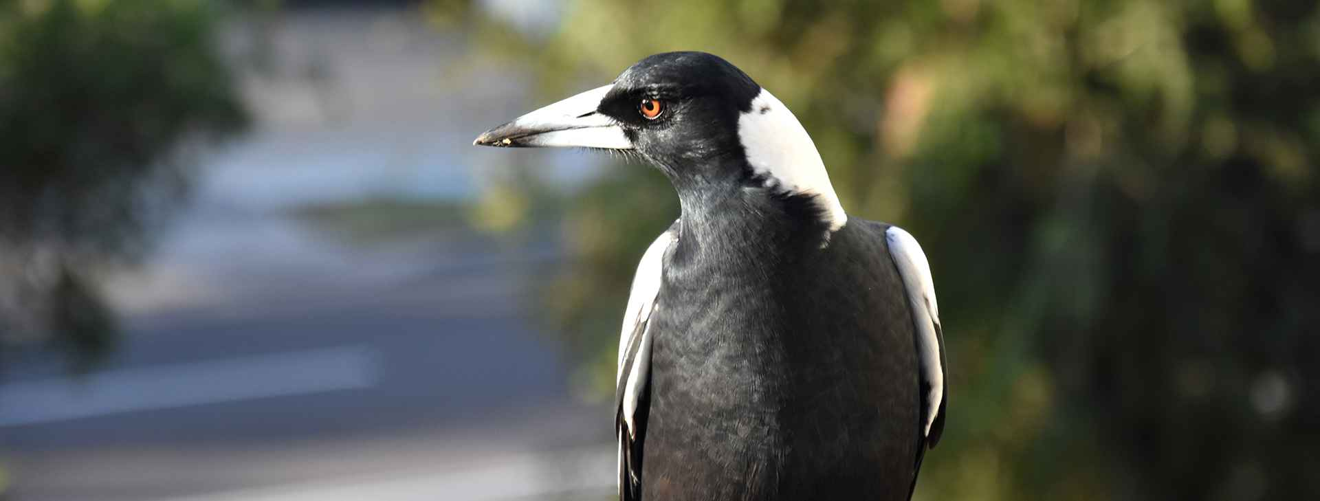 Magpie - Webpage