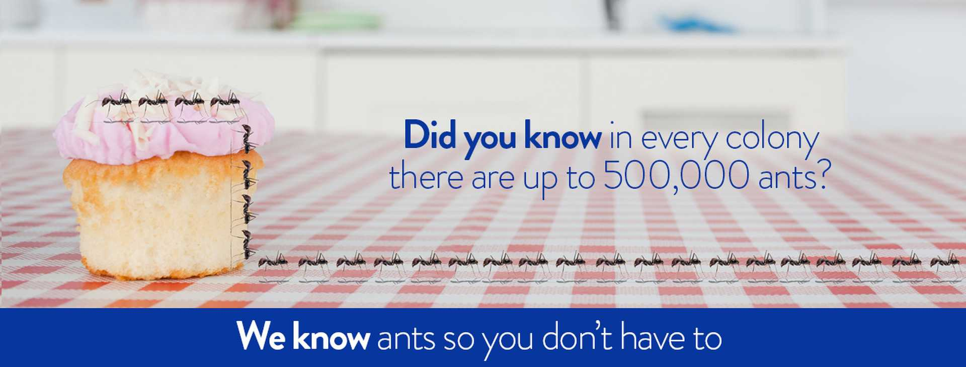 We know ants so you don't have to.