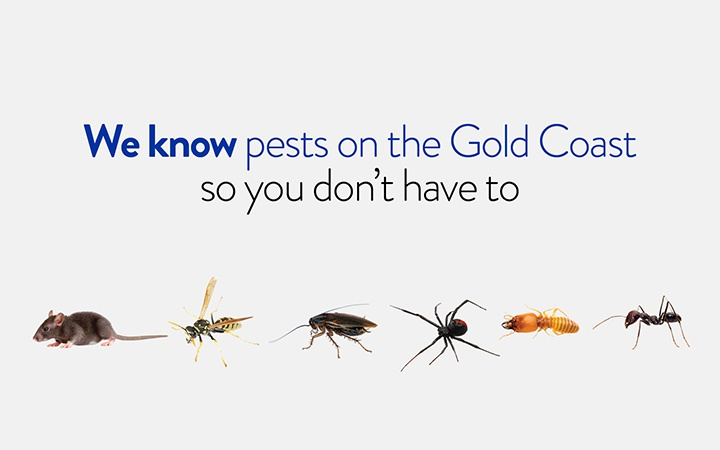 Pest Control Gold Coast, Queensland QLD