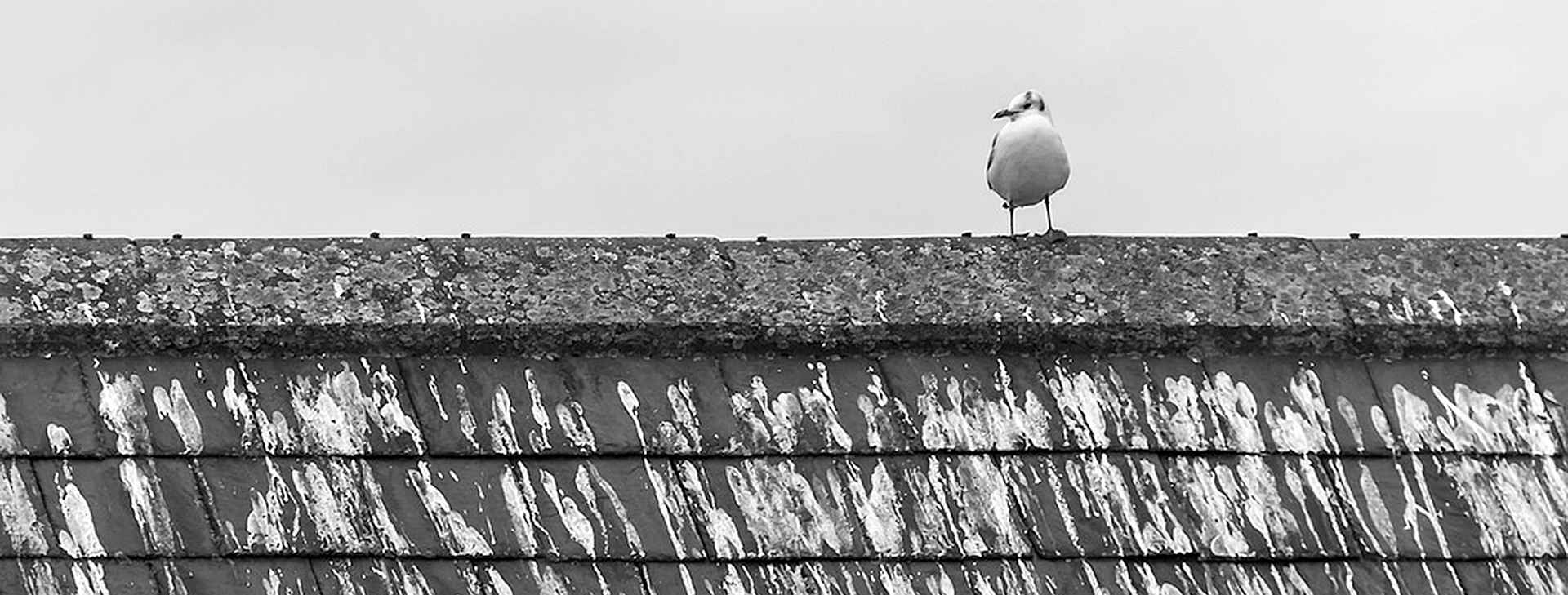Seagull Droppings on roof