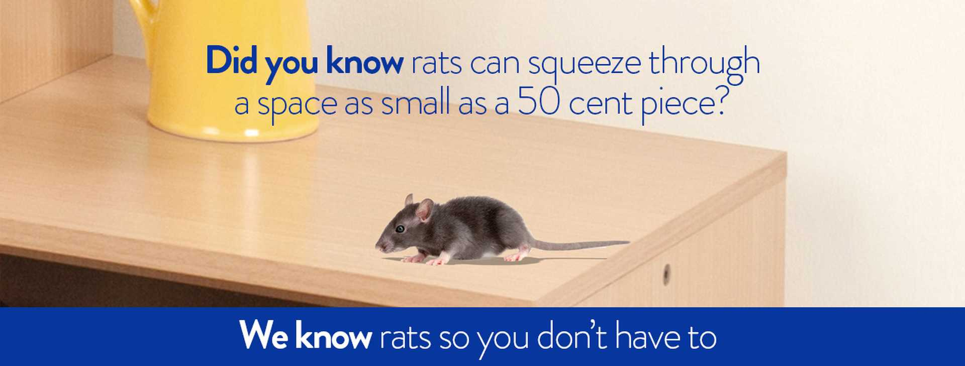 We know rodents so you don't have to.