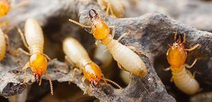 Termite Protection Sydney