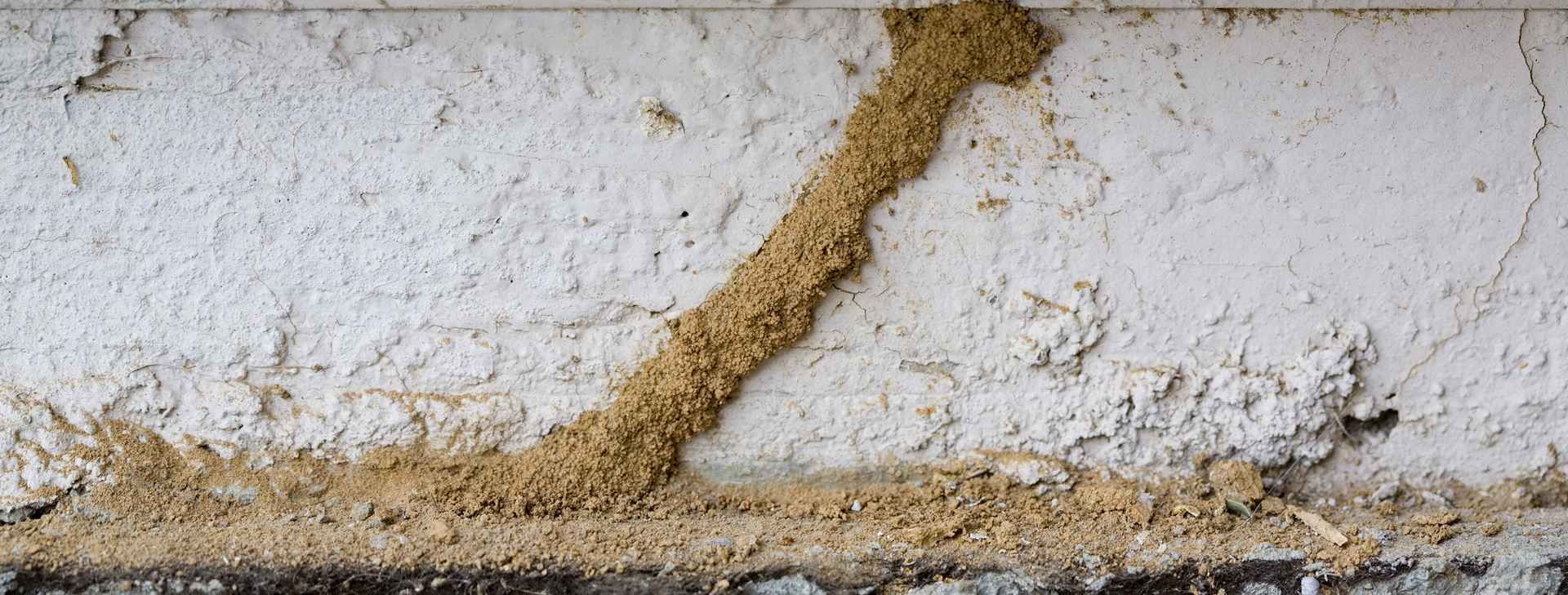 Signs Of Termites White Ants Pest Control Termitrust
