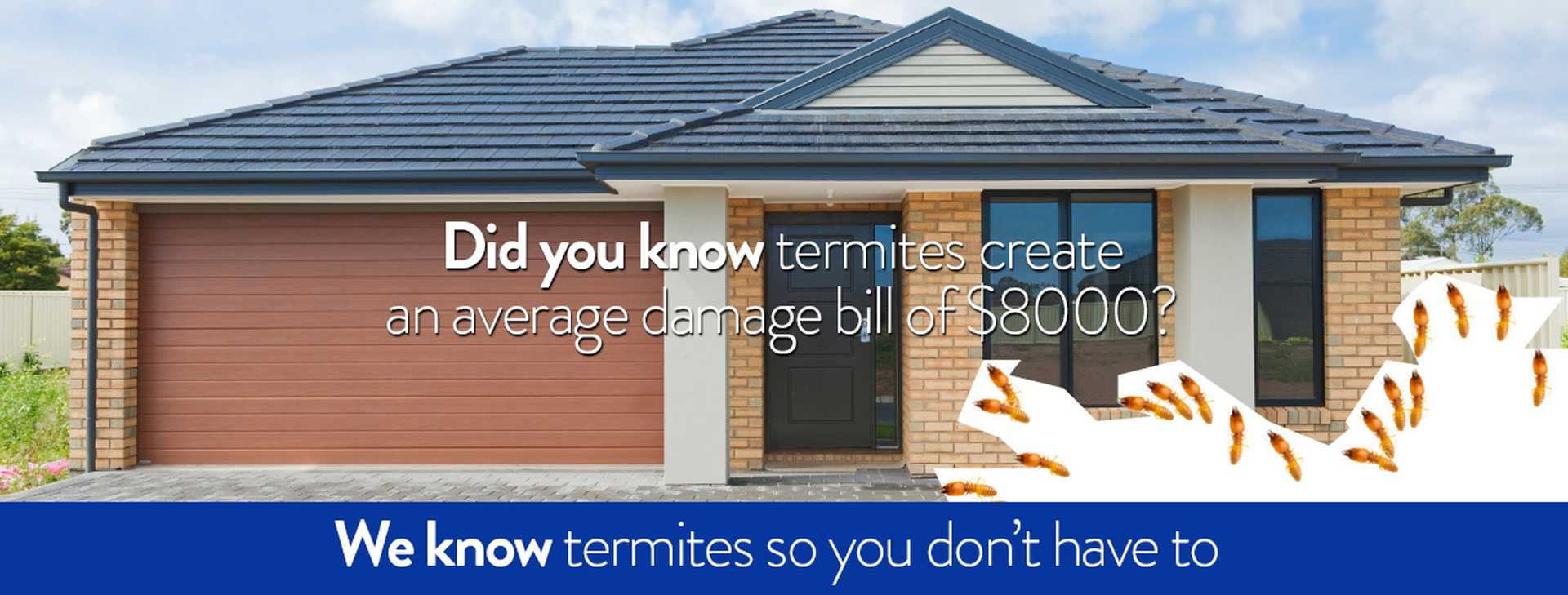 We know termites so you don't have to.