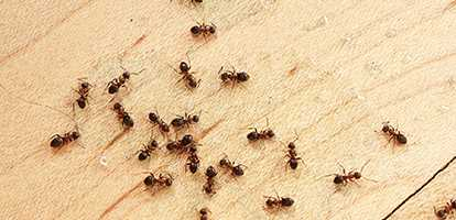 Pest Control in Rockhampton