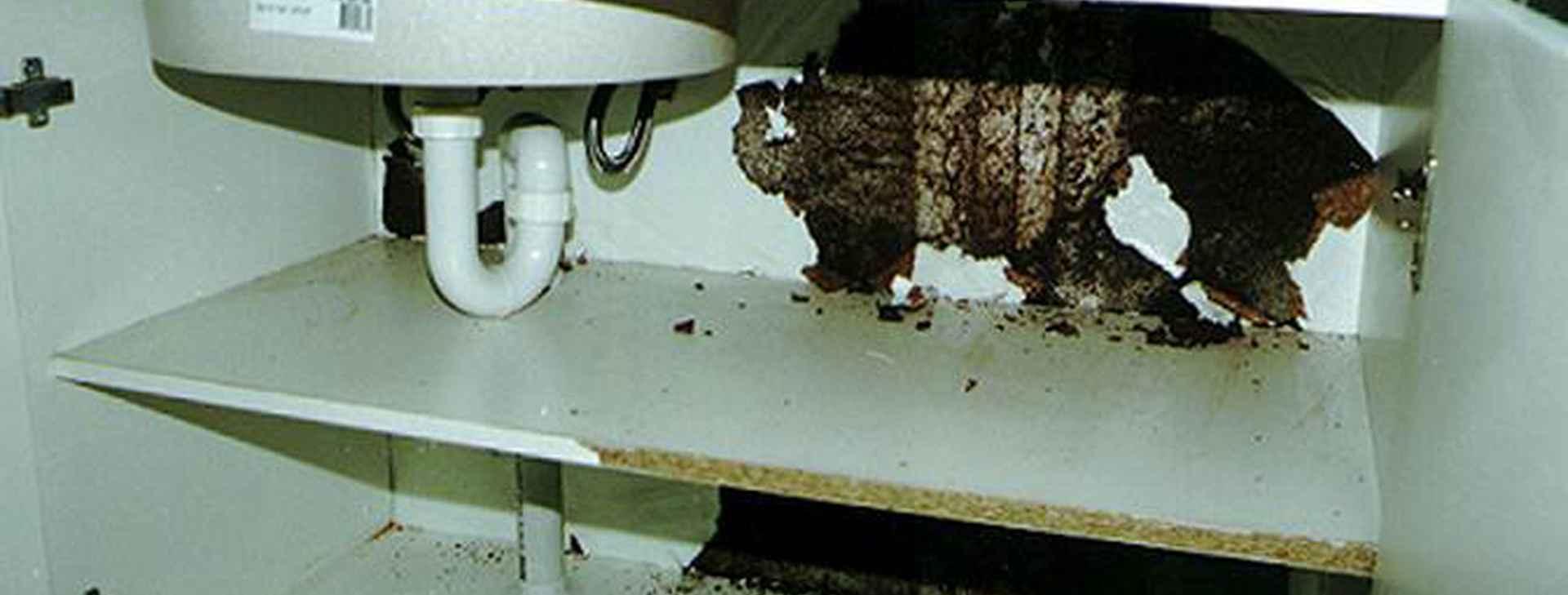 Termite Damage Termimesh
