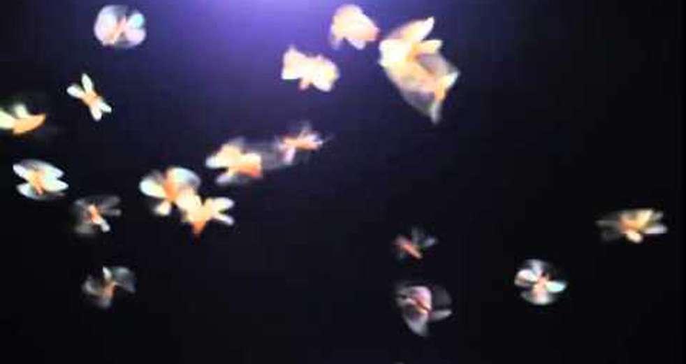 Flying Termite Alates